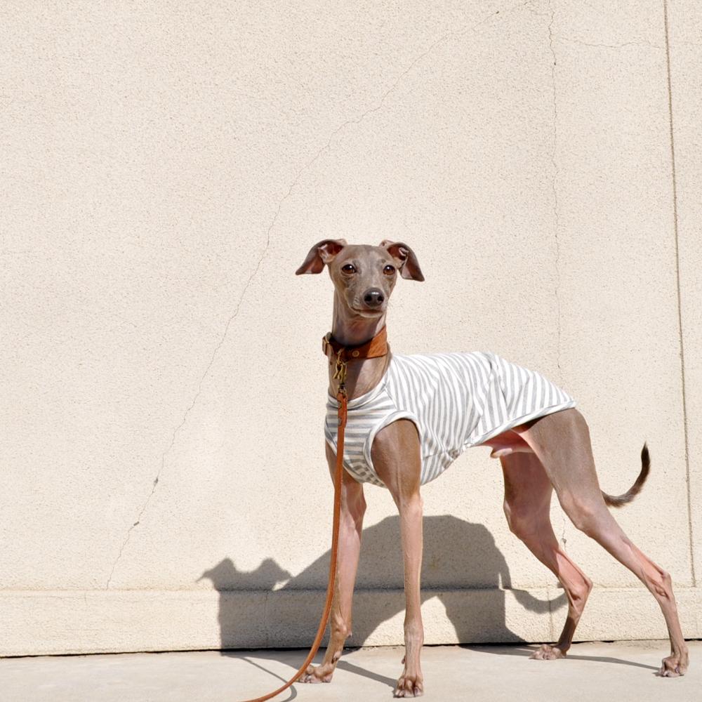 イタグレ服、ミニピン服、ウィペット服、サルーキ服、犬服・犬寝袋・雑貨の通販|犬服|杢天竺ボーダーニット|選べる3タイプ×5カラー(ベージュ/ネイビー/グレイ/シルバー/ブラウン)
