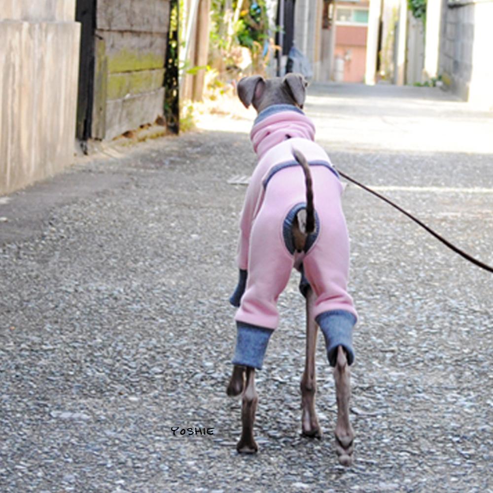 """オケツを""""プリプリ""""させて嬉しそうに散歩するBuono!"""
