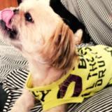 「一からの犬服作り4」手元に生地がない!!そんな時はTシャツをリメイクしよう!「リメイク時の注意点」