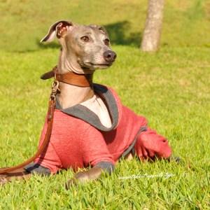 イタグレ服|ミニピン服|犬服|トレーナー|スポーツタイプ|選べる4タイプ×3カラー(ポピーレッド/栗色/ロイヤルブルー)