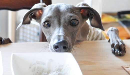 愛犬のご飯で悩んでることありますか?①食べムラがあるんですが・・・