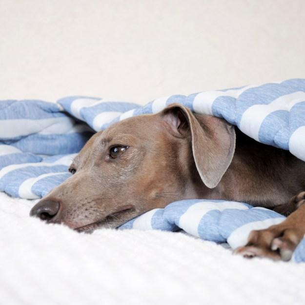 寝袋&カフェマット 暑い日も快適に「ひんやり涼しい」「吸汗速乾」「しなやかで、やわらかい」 マーベラスクールキルト生地 選べる12カラー