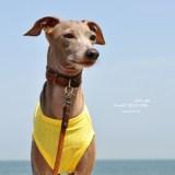 犬服|Summer Sport Mesh|通気性、伸縮性、速乾性に優れたメッシュ|選べる4タイプ×3カラー(パステルブルー/パステルイエロー/パステルピンク)