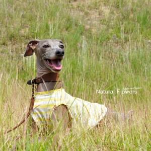 犬服 Natural Flowers 綿100%ボーダーガーゼ 選べる3タイプ
