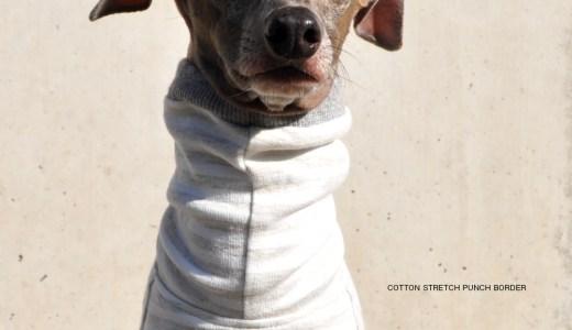 「一番必要な犬服」コットンストレッチポンチボーダー 新登場