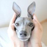 皆さんの愛犬の本当の姿を教えて下さい!