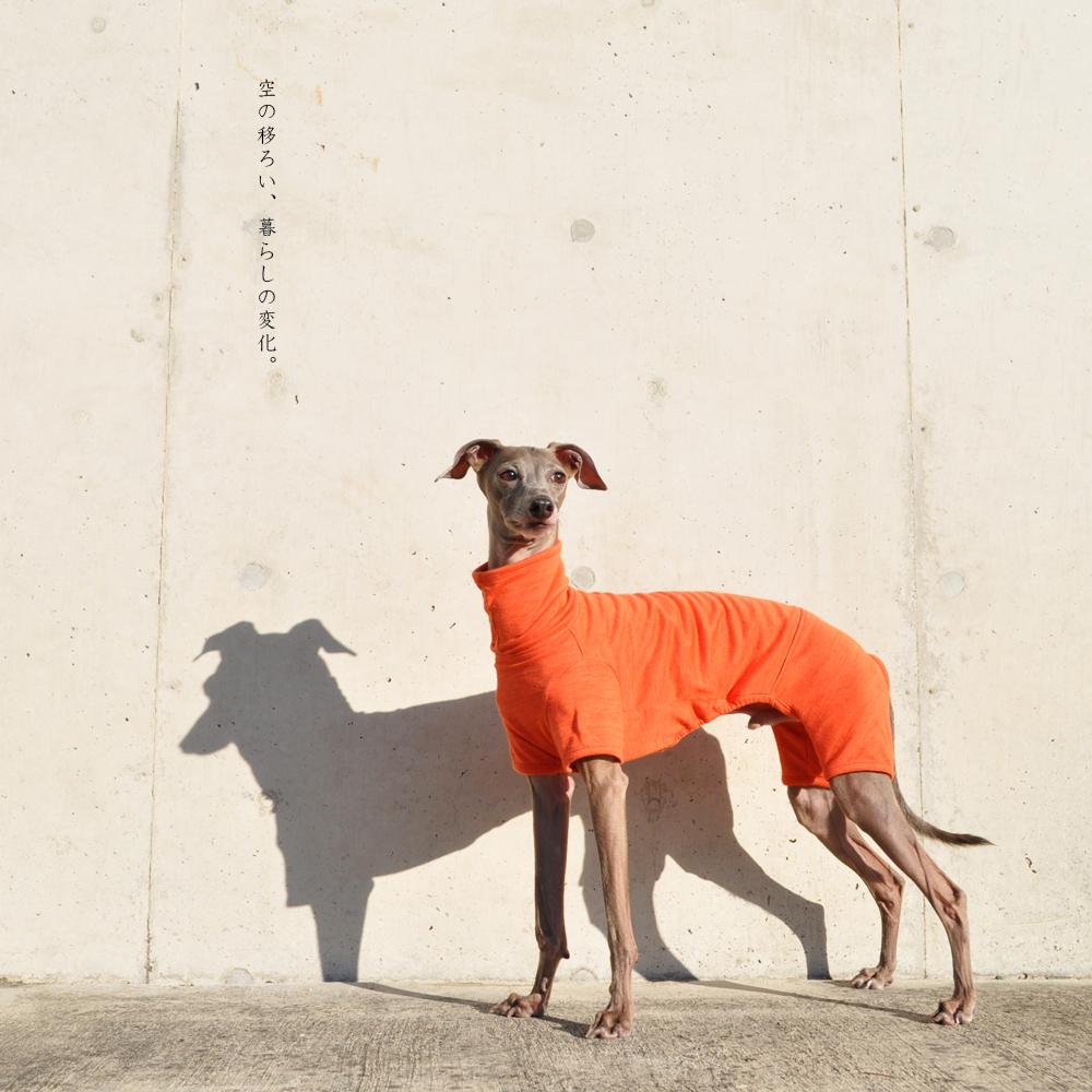 イタグレ服、ミニピン服、ウィペット服、サルーキ服、犬服・犬寝袋・雑貨の通販|犬服|空の移ろい|日本製スペック天竺ニット|選べる4タイプ×3カラー(蒲公英色/橙色/茜色)+Aくらぶメンバー限定6カラーあり
