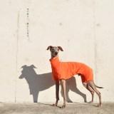 犬服 空の移ろい 日本製スペック天竺ニット 選べる4タイプ×3カラー(蒲公英色/橙色/茜色)+Aくらぶメンバー限定6カラーあり