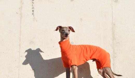 「寒い日も、暑い日も愛犬が快適に暮らせる優しいお洋服」犬服|空の移ろい|日本製スペック天竺ニット 新登場