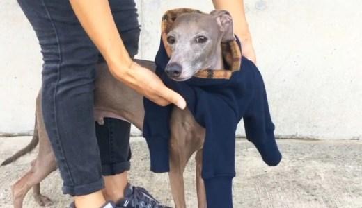 (仮)イタグレ服ロンパースの簡単な着せ方-Italian Greyhound Clothes