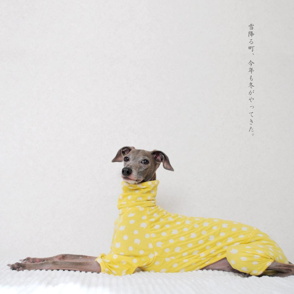犬服|雪降る町、今年も冬がやってきた。|接結ニット|選べる4タイプ×6カラー