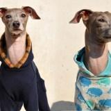 イタグレ服・ミニピン服の辞書:お店一覧、犬服の疑問を解決します