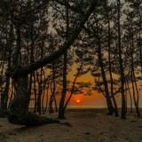 松林の先は広がる海と夕焼け