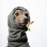 ミニピンがスヌードを使ったら、お散歩から戻っても耳が冷たくない!