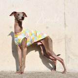 イタグレ服|ミニピン服|ウィペット服|チャイクレ服|サルーキ服|犬服|にこちゃん|スムースニット|選べる4タイプ