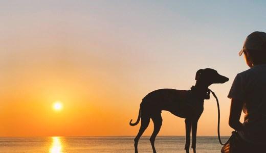 【聞いて下さい】私の気持ち。犬服作りがBuono!との暮らし。犬服作りが苦しい。新型コロナウイルス感染症。新作発表がない理由。犬服作りが愛おしい。