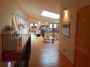 Galerie-boispetrifie-araucaria-4