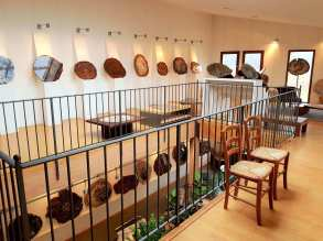 Galerie-boispetrifie-araucaria-5