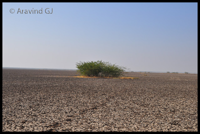 Gujarat day 1 and 2: Little Rann of Kutch
