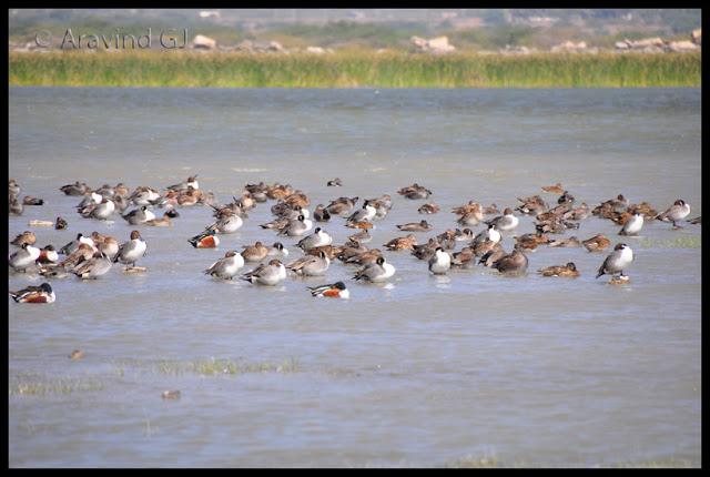 Gujarat day 7: Dwaraka