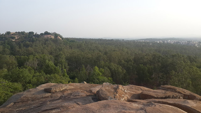 A short hike in Turahalli forest
