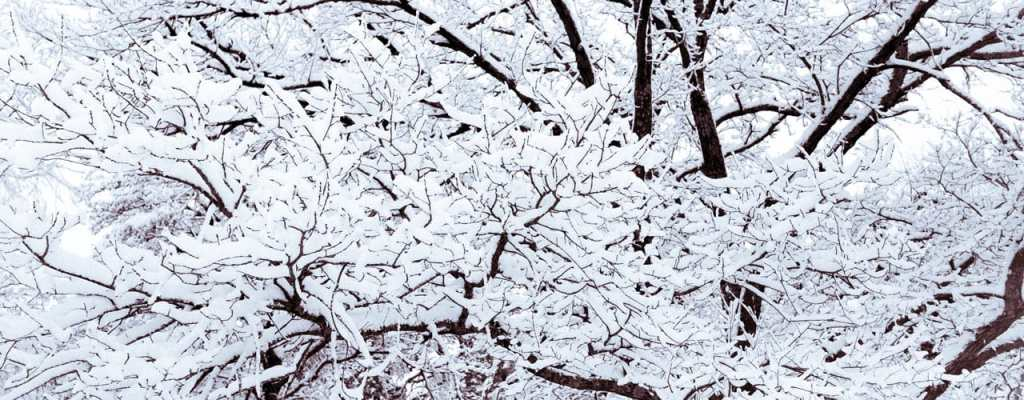 snow covered tree branches during the winter in Dayton, Ohio