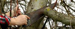 pruning mistakes