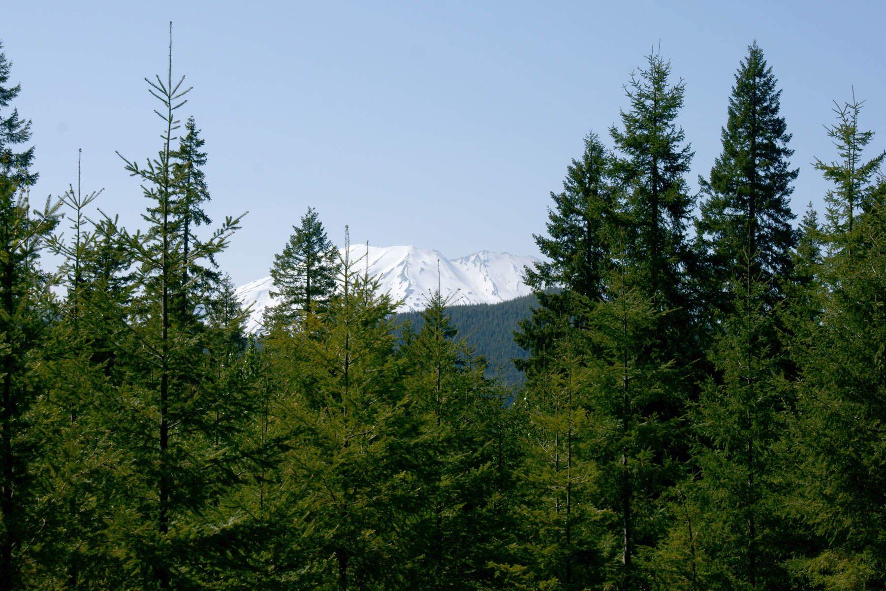 The temperate forest is very variable, in some places the deciduous trees predominate while in others the conifers are more common. Celebrating Forests Today And Every Day Arbor Day Blog