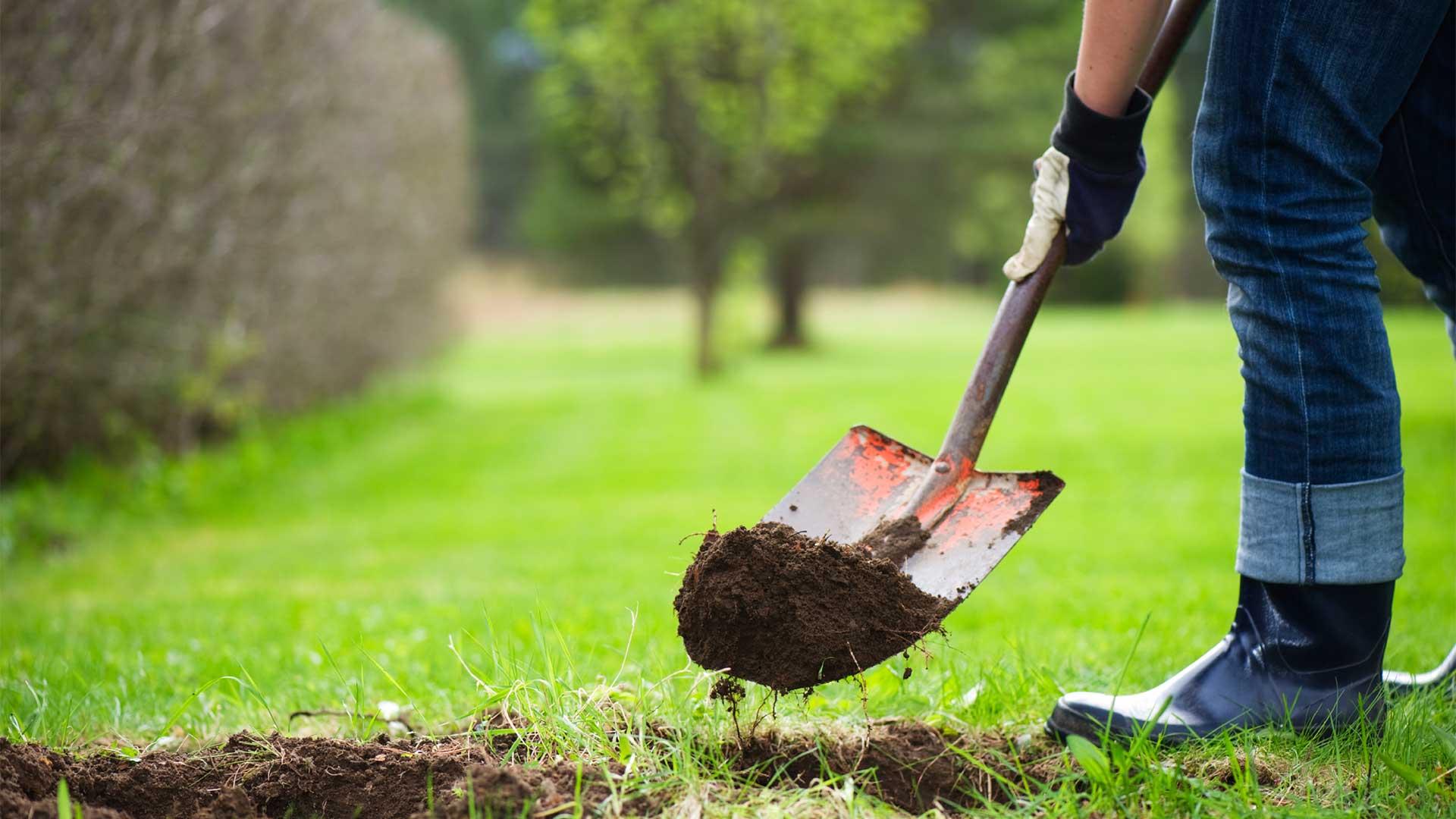 Image result for planting