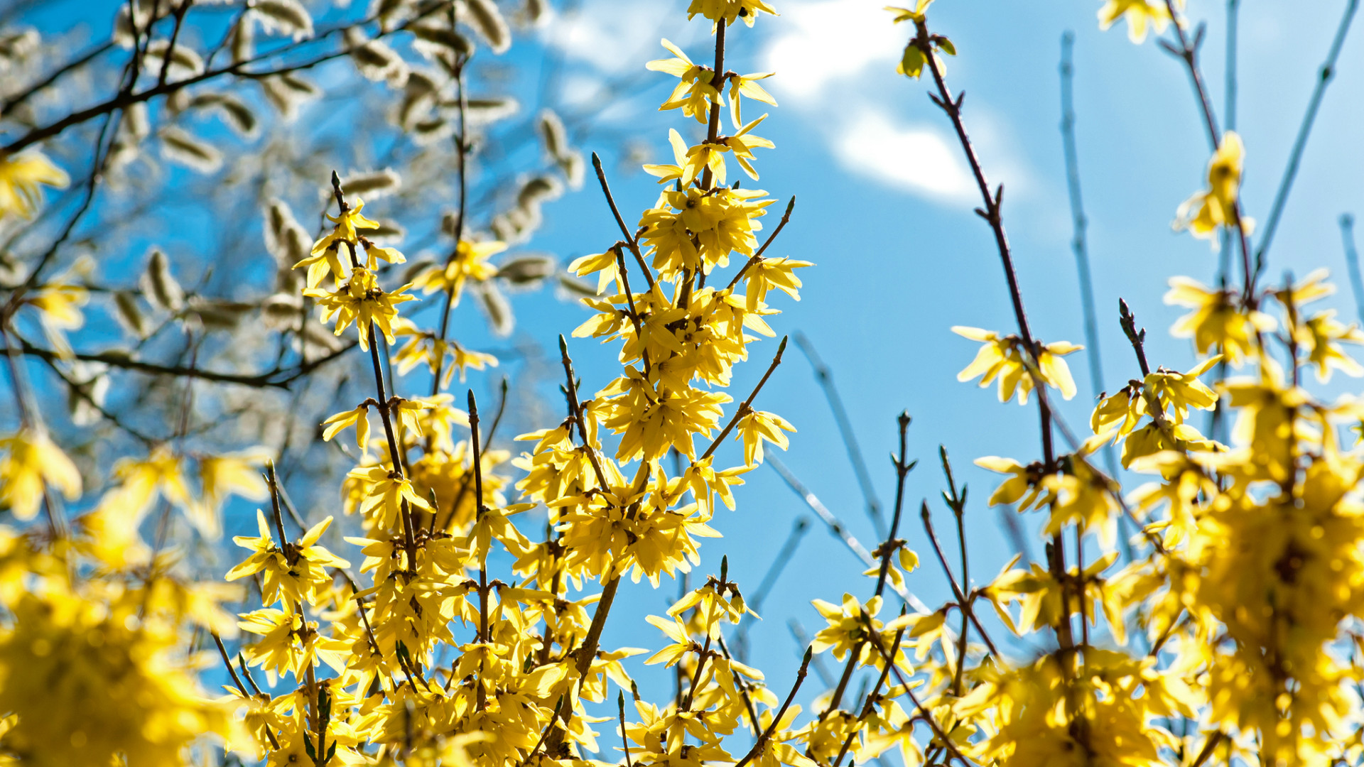 Top 10 Arbor Day Nursery Trees Arbor Day Blog
