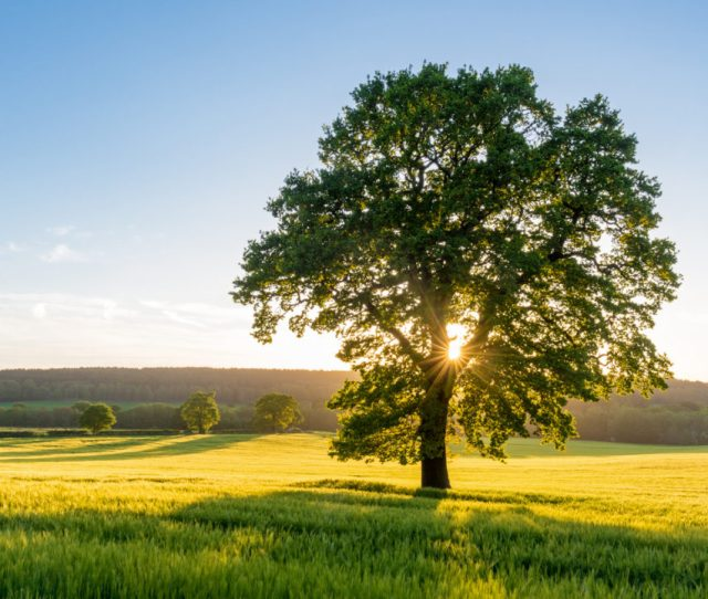 Choosing The Right Tree In The Right Place Can Be A Daunting Task Should I Plant A Fruit Tree Or Flowering Will It Be Fast Growing Or Slow