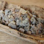 boswellia_serrata