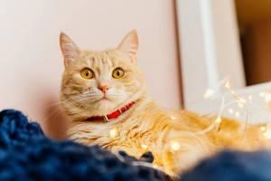 prenom-caliente-chat-femelle
