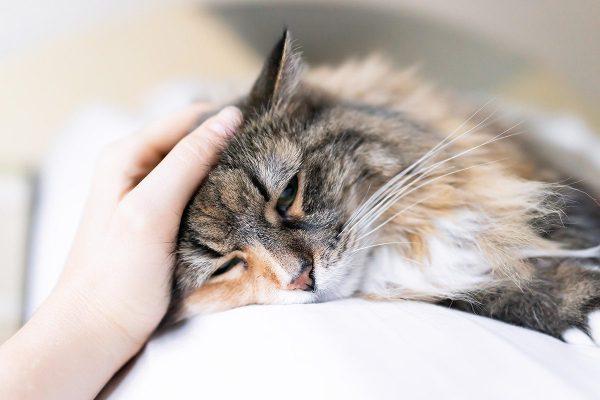 vomissement-chat-arboricat