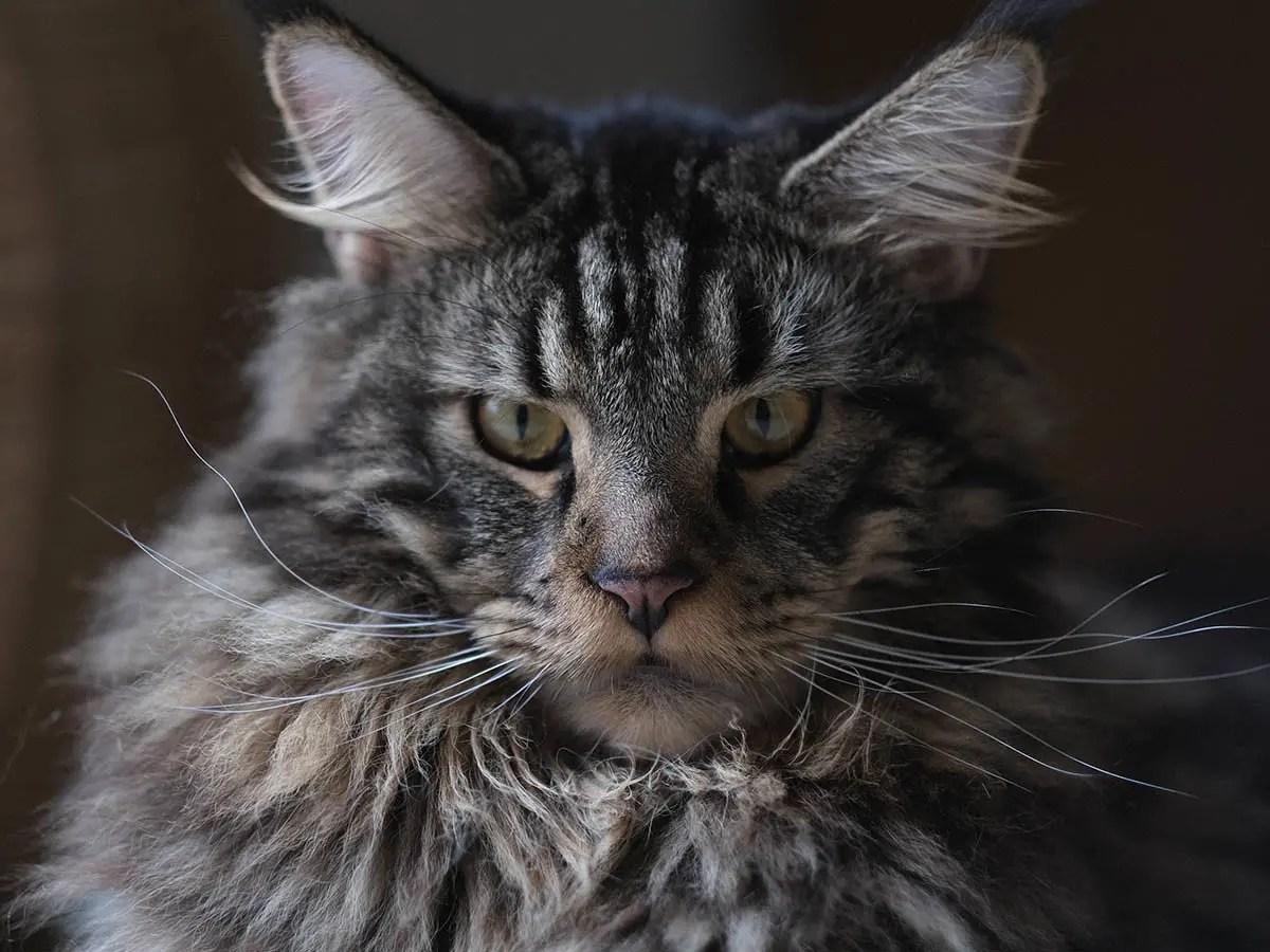 prenom-chat-femelle-arboricat
