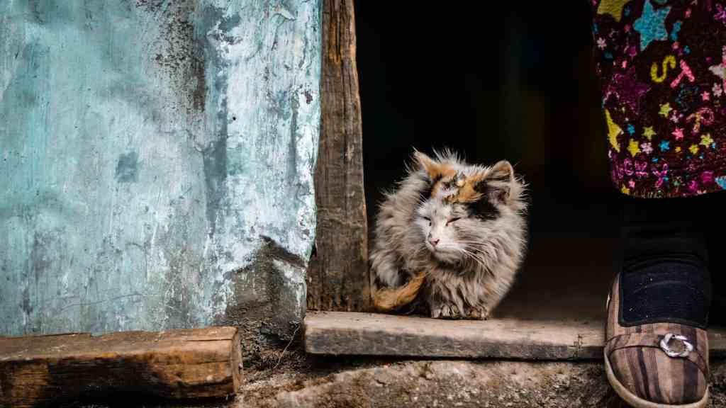 un-chat-devient-adulte