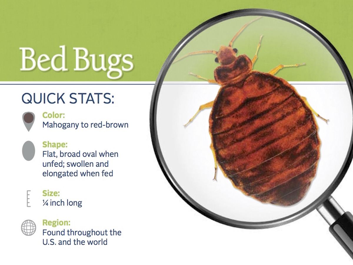 How To Kill Bed Bugs By Washing Arbor Pest Management