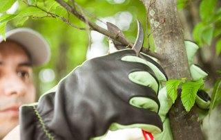 Types of Tree Pruning