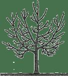 Pflege von Obstbäumen