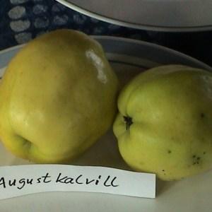 Augustkalvill - Apfelbaum – Alte Obstsorten Arboterra GmbH