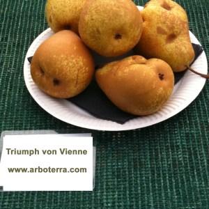 Triumph von Vienne - Birnenbaum – Alte Obstsorten Arboterra GmbH
