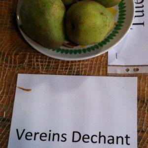 Vereinsdechantbirne - Birnenbaum – Alte Obstsorten Arboterra GmbH