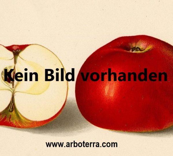 Apfel – Alte Obstsorten Arboterra GmbH