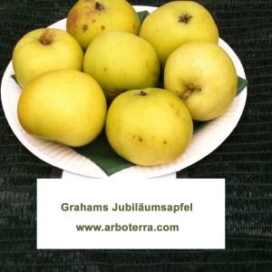 Grahams Jubilaeumsapfel - Apfelbaum – Alte Obstsorten Arboterra GmbH