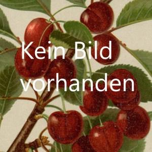 Kirschenbaum Muster Alte Obstsorten Arboterra Gmbh
