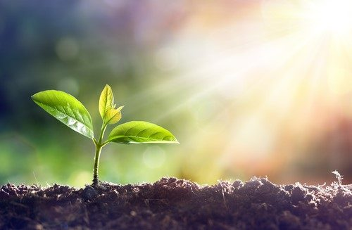 How will your small business grow?