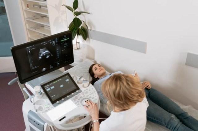forêt arbres alignés