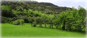 Haie jeune de feuillus entre deux champs de céréales