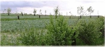 Haie encadrant une plantation agroforestière fleurie