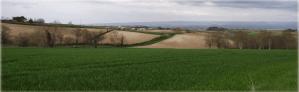 Champs de céréales et quelques haies au loin